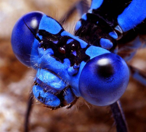 Portraits-of-insects-001