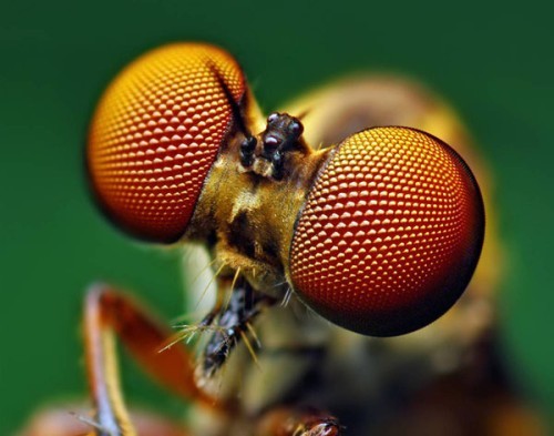 Portraits-of-insects-002