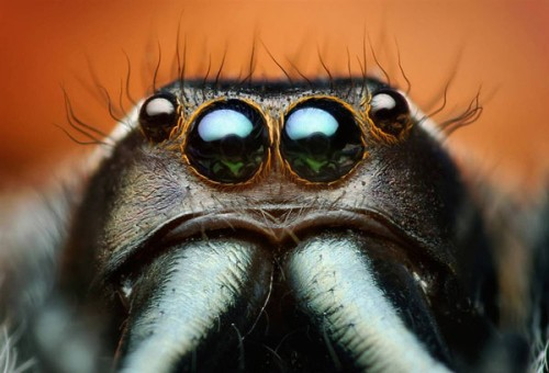 Portraits-of-insects-003