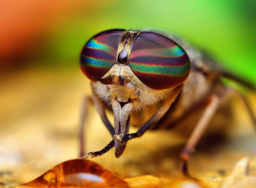 Portraits-of-insects-004