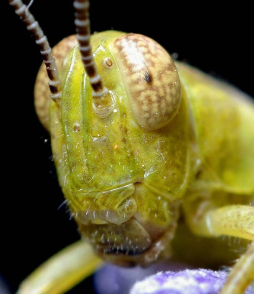 Portraits-of-insects-005